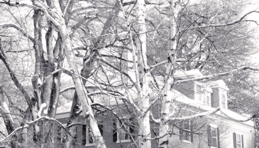 winter flurry blog